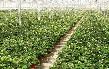 Strawberry Production